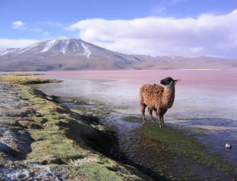 Connaissez-vous les déserts d'Amérique du Sud ?