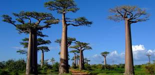 Voyage sur Mesure à Madagascar